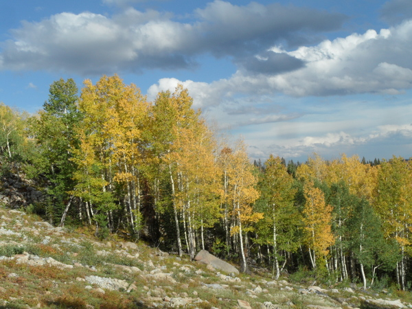 Click to sign up for free weather forecasts for Steamboat Springs!